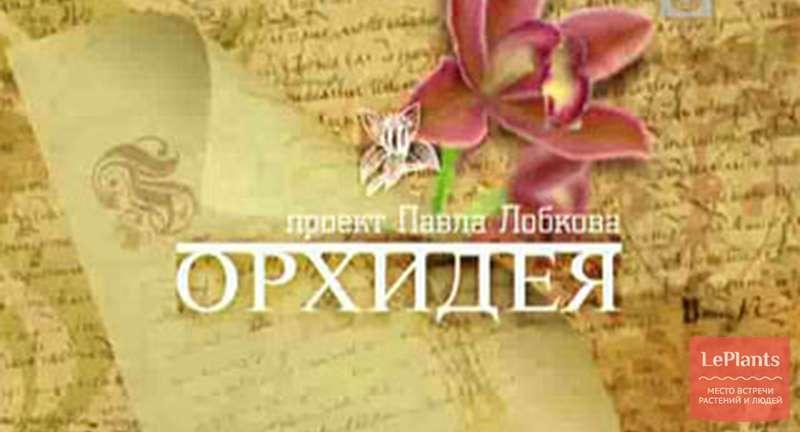 «Орхидея». Фильм Павла Лобкова