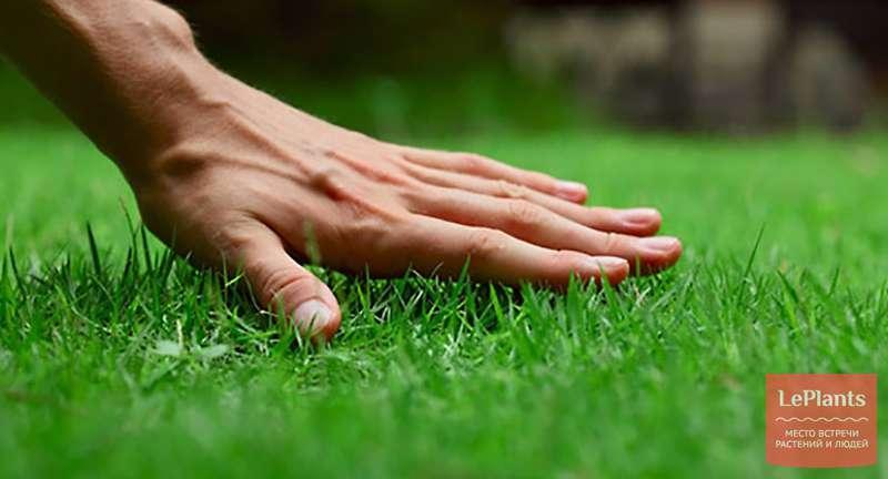 Разные газоны для разных целей: луговой, садово-парковый, партерный, спортивный, мавританский газоны