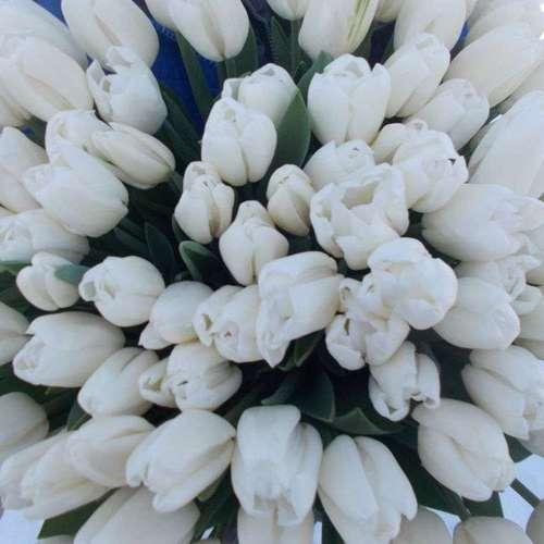 Тюльпаны оптом Красноярск, от производителя