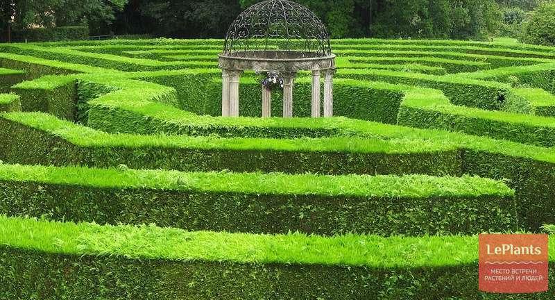 Живая изгородь в саду — выбор растений, оформление и уход