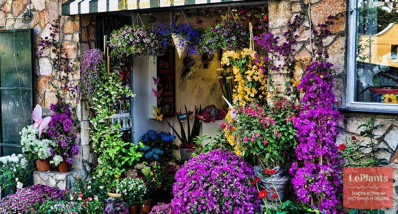 Основные правила покупки растений