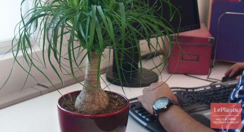 Выбираем неприхотливые комнатные растения