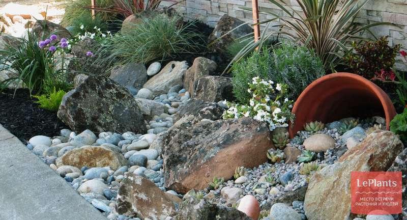 Идем каменистым путем: виды альпинариев, их отличия и особенности