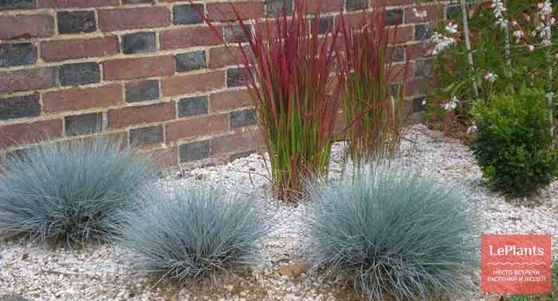 5 основных правил покупки декоративных трав и злаков
