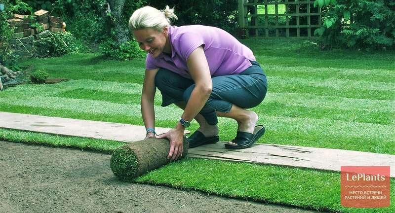 Рулонный газон: секреты правильного выбора и укладки