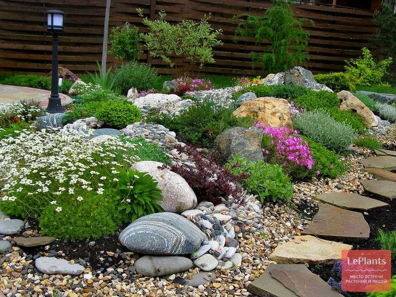 Растения для рокариев и альпийских горок