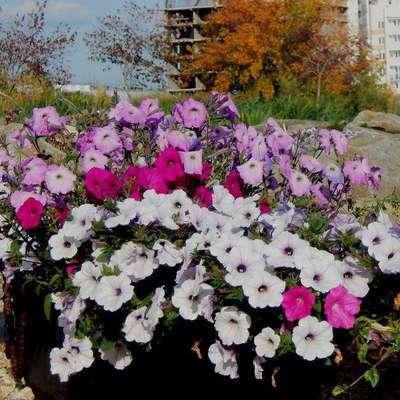 Новый тренд Челябинска — свадьба в Ботаническом саду