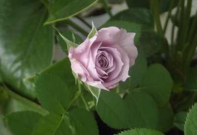 Изображение в саду