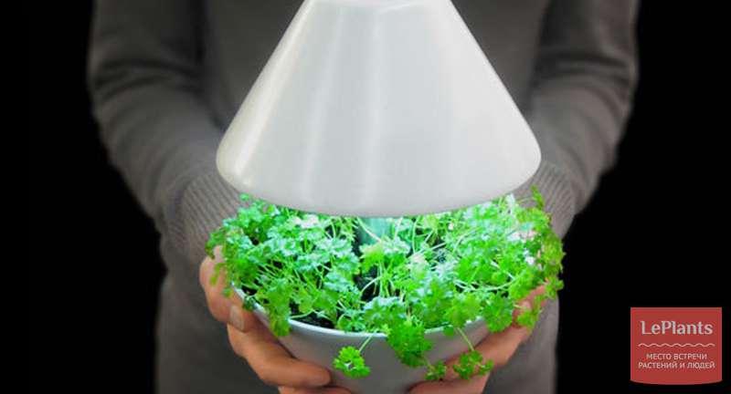 Основы правильного освещения комнатных растений