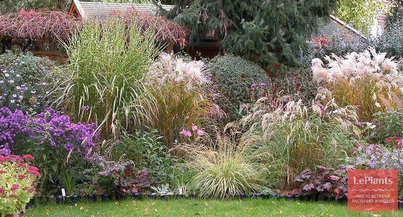 Секреты пересадки декоративных трав в саду