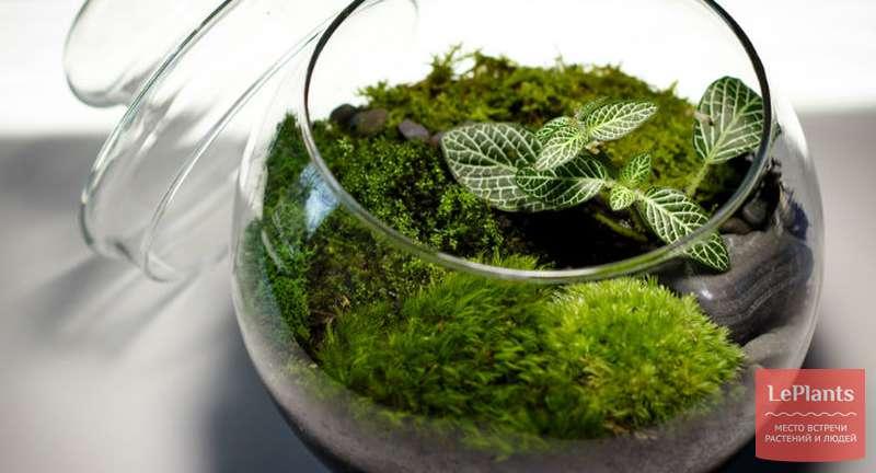 Флорариум ― комнатная оранжерея