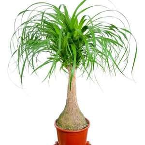 старые растения