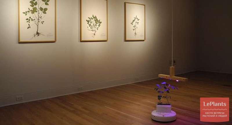 Soybot — робот, доставляющий растения к источнику света