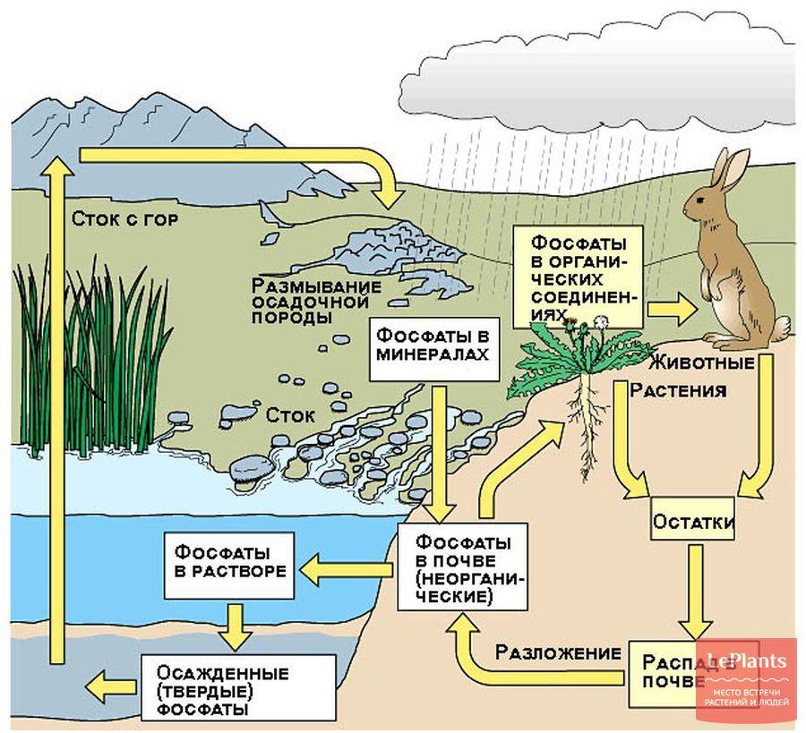 фосфор в природе