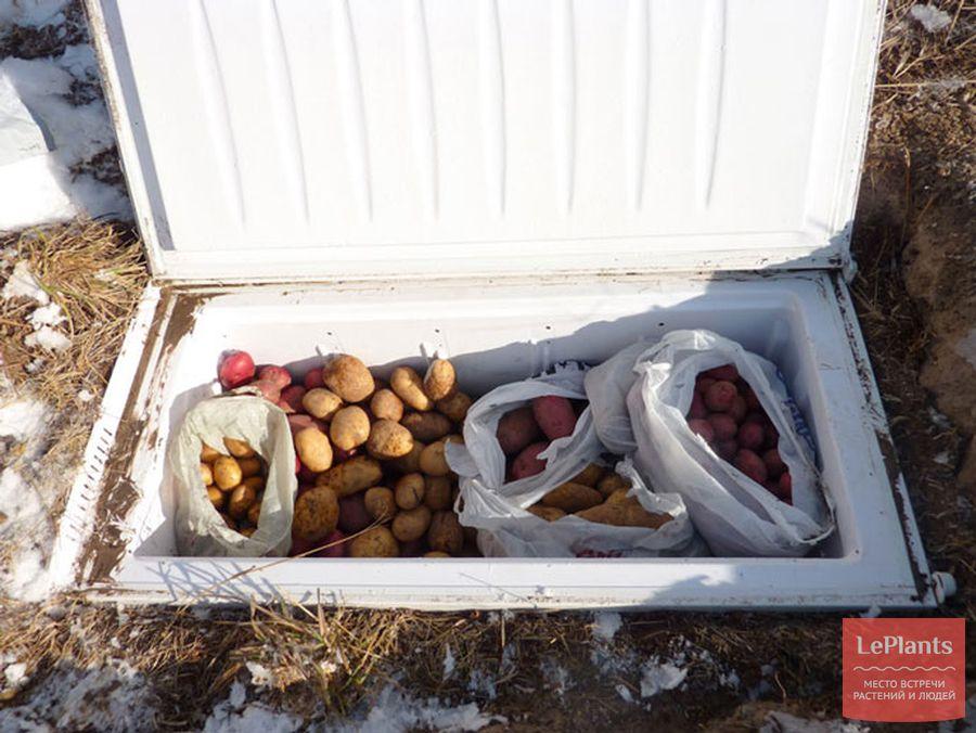 хранение картофеля в старом холодильнике