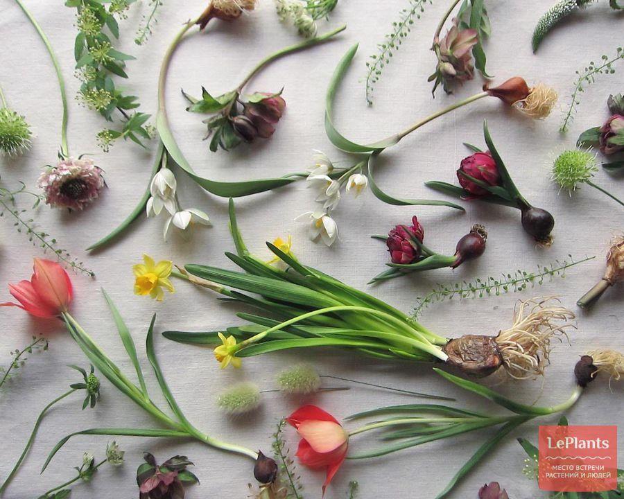 Выращивание луковичных