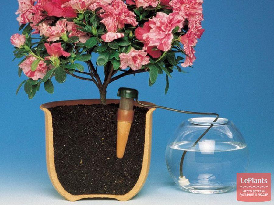 как организовать автополив растений в комнате