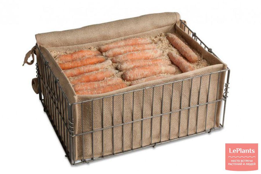 хранение моркови в ящике в подвале зимой
