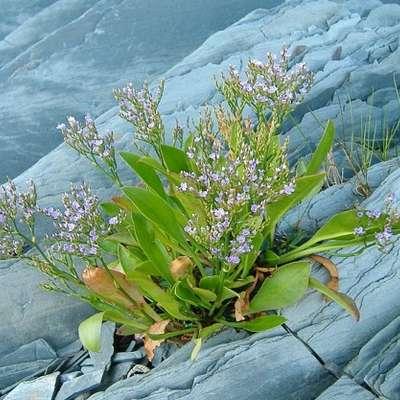 Стрессовая память поможет растениям выжить при глобальном потеплении