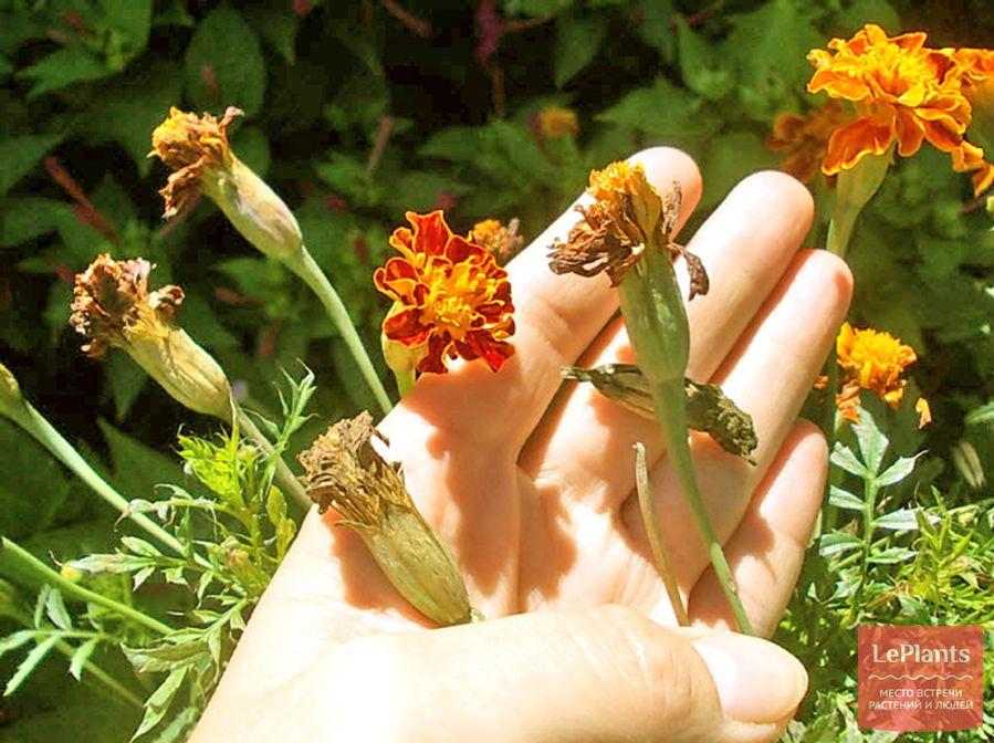 Какие цветы можно выращивать на лоджии круглый год?