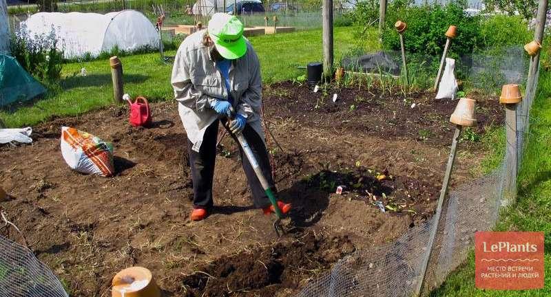 Осенняя подкормка сада: о чем не стоит забывать