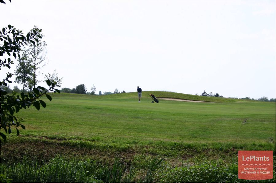 гольф на спортивном газоне