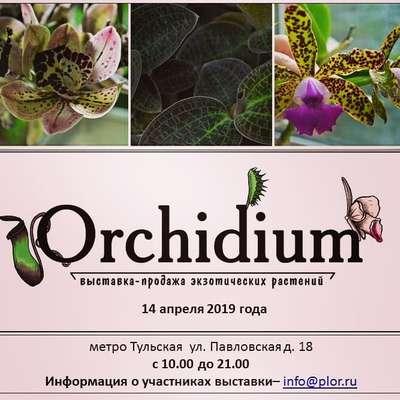 """ВЫСТАВКА - ЯРМАРКА орхидей и экзотических растений """"ОРХИДИУМ"""" стартует 14 апреля недалеко от м. Тульская"""