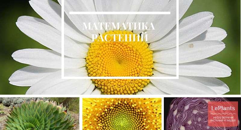 Жизнь растений по закону чисел