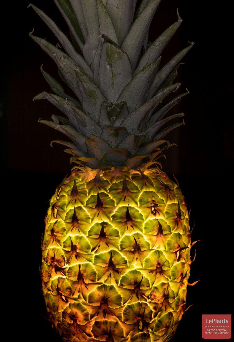 дробь представляет необычные фото обычных фруктов уголок особый