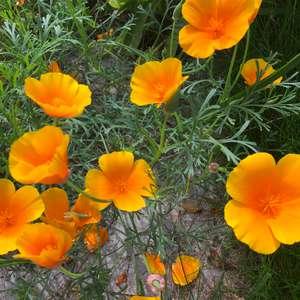 Мой сад (красивоцветущие)
