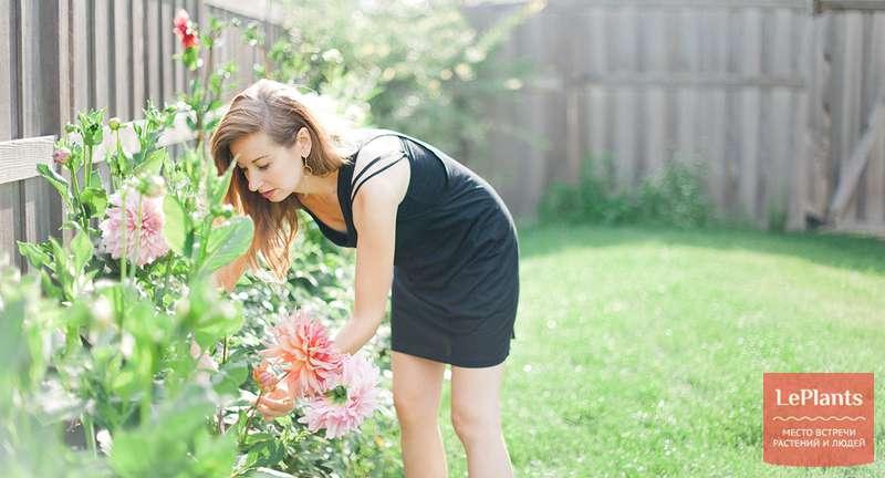 Основные правила выращивания и ухода за георгинами — с весны до глубокой осени