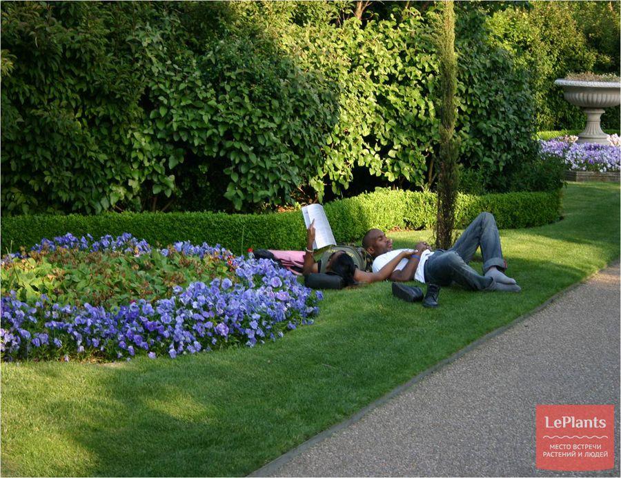 отдых на садово-парковом газоне