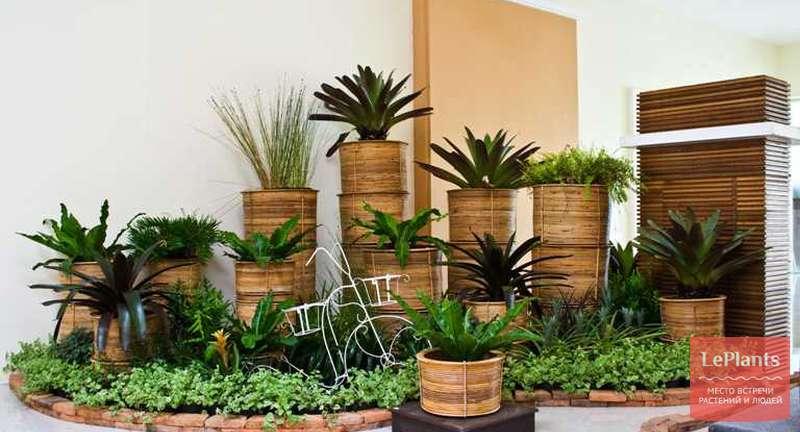 Растения для очищения воздуха в квартире