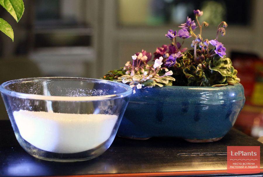 растения выращенные с использованием янтарной кислоты