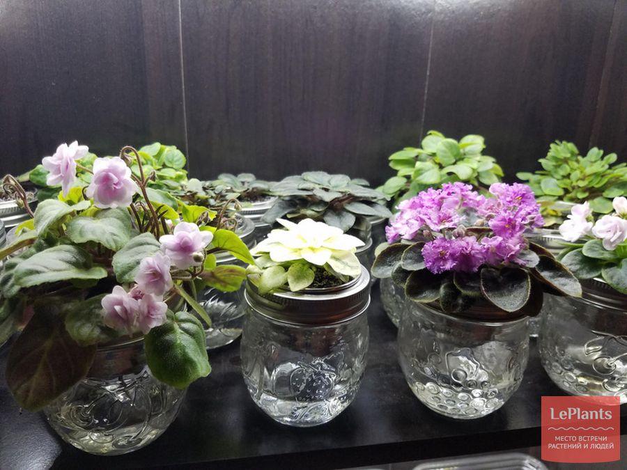 автоматический фитильный полив комнатных растений