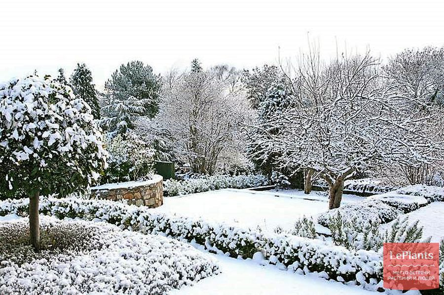 рекомендации по уходу за газоном зимой