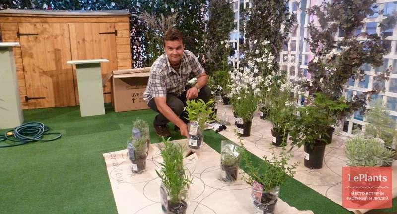 Как с помощью Gardenonaroll быстро организовать цветник в саду