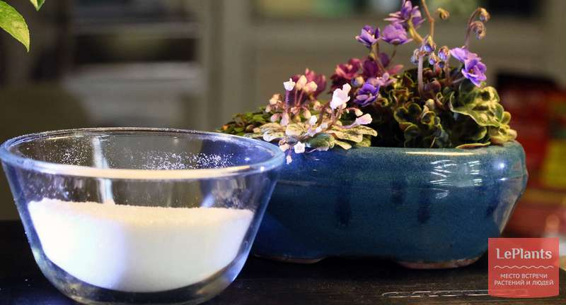 Использование лимонной, янтарной и яблочной кислот в качестве регуляторов роста и развития растений