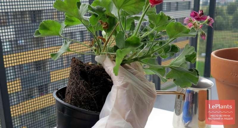 Основы правильной пересадки растений