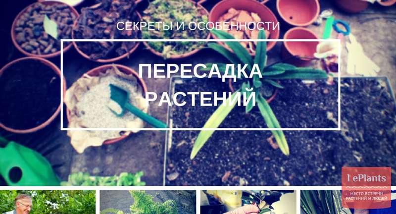 Секреты пересадки популярных комнатных растений