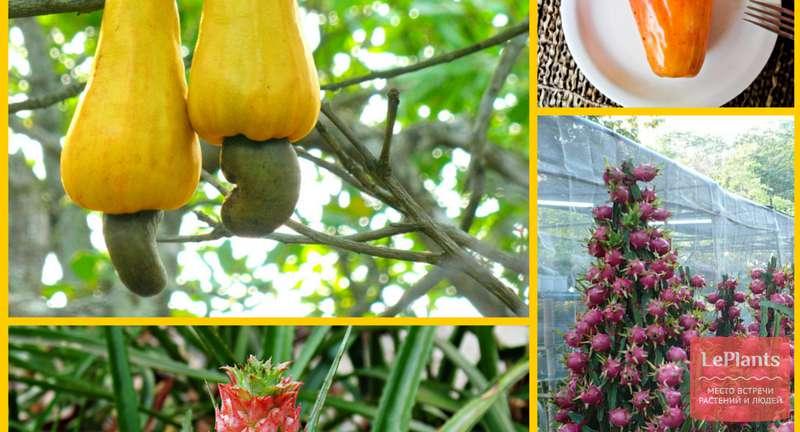 Растут ли ананасы на деревьях и откуда берется черный перец — раскрываем тайны происхождения привычных продуктов