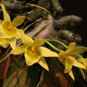 Орхидариум, орхидеи, эпифиты и о все о них