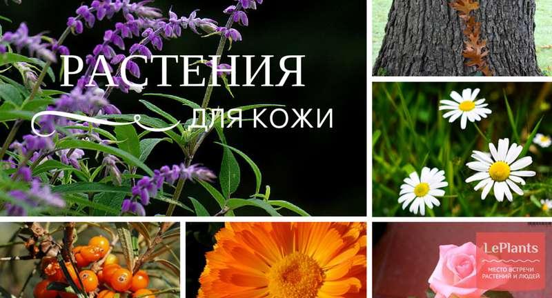 Какие растения помогают в уходе за кожей?