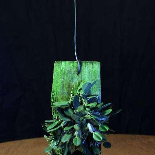 Dendrobium jenkinsii - Дендробиум Дженкинса, орхидея