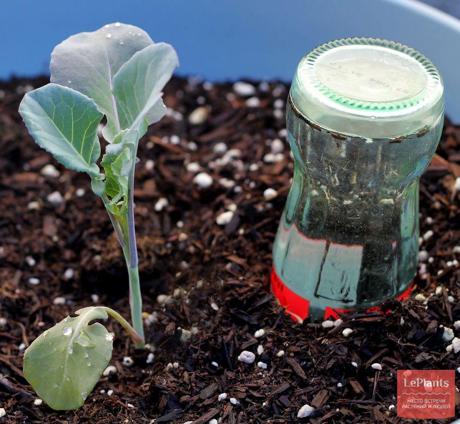 автополив комнатных растений из бутылки