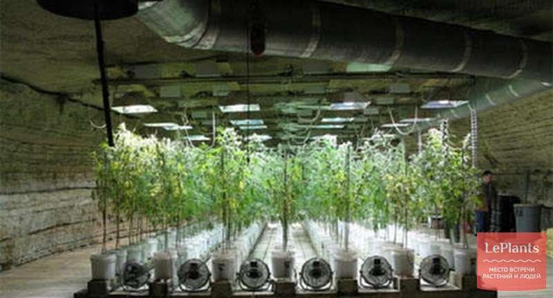 Гидропоника из семян сравнение конопли и сигареты