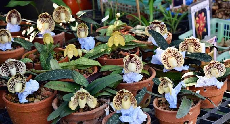 Рынок Чатучак в Бангкоке: интересные растения, на которые стоит обратить внимание