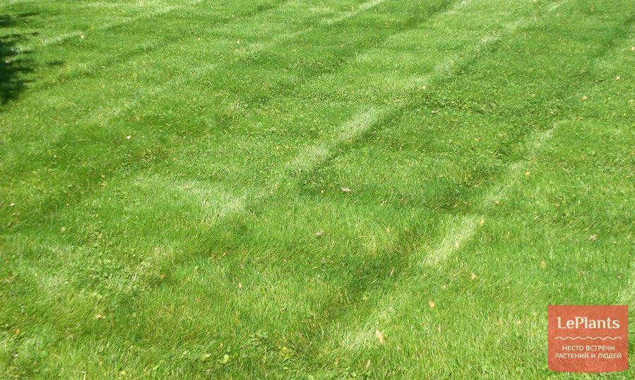 неравномерная стрижка газона