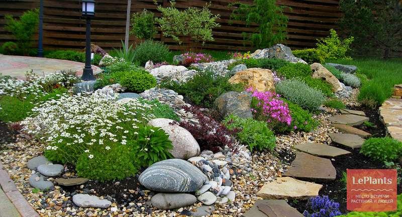 Растения для альпийской горки — горная флора в вашем саду