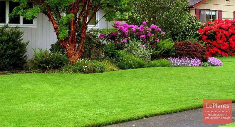 Календарь идеального газона — ежемесячный уход за газонной травой